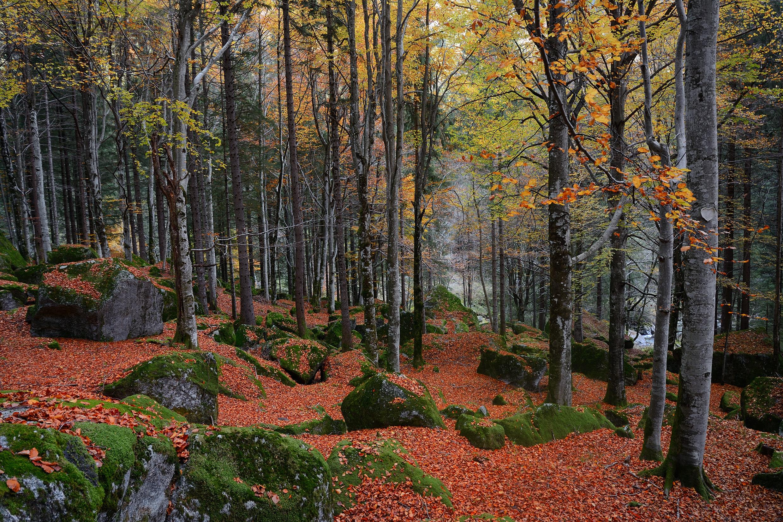 Foresta regionale bagni di masino sprea fotografia - Bagni di masino ...