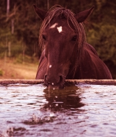 The horse and the water