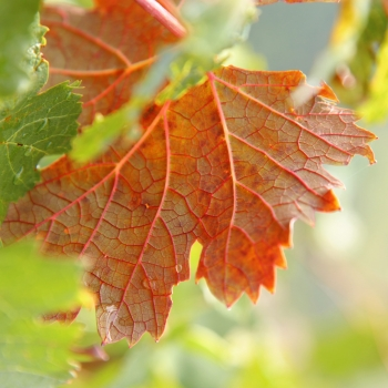 Autunno in macro