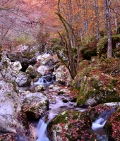 Autunno in Val Trenta