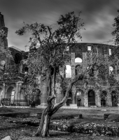 Colosseo Black & White