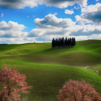 Cypresses HDR