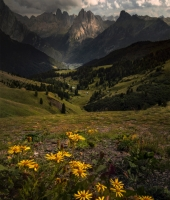 Flowers of the Dolomites