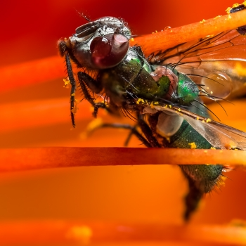 Honor to the fall fly - by Mario JR Nicorelli con Nikon D300s Macro fotografia - Macro Photography - Macro Foto