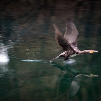 in flight on the reflection
