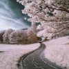 Ir Pink View in Callendar Park UK