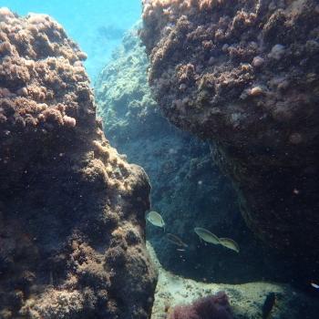 L'affascinante mondo subacqueo