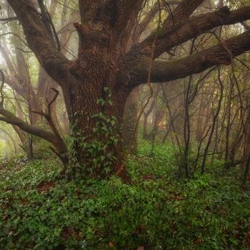 magia nel bosco.....
