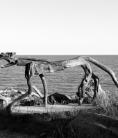Sculture in riva al mare.
