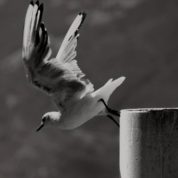 Seagull departure